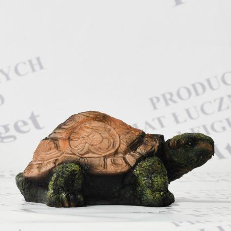 żółw 2